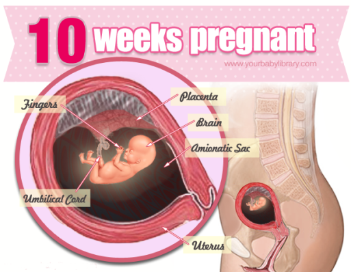 10-weeks-pregnant-getting-the-hang-of-pregnancy-e1356438302672