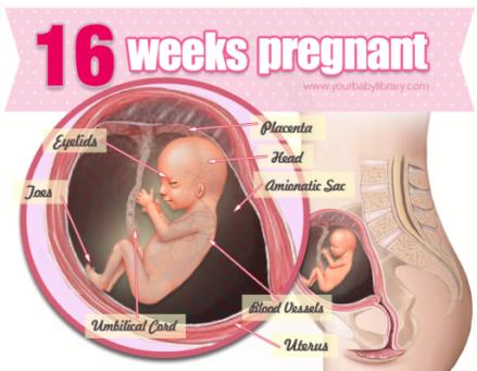 16-weeks-pregnant-feeling-so-fine-e1357201390761