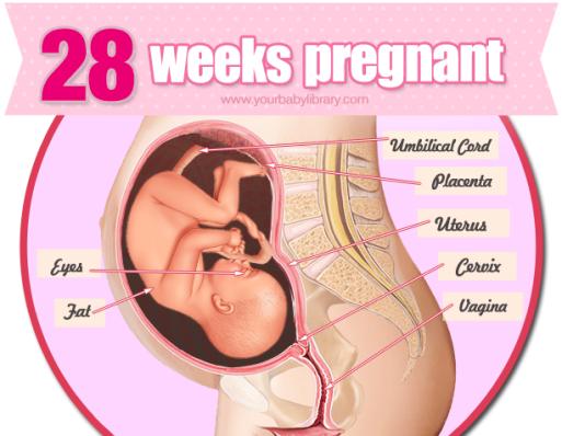 Беременность по неделям 27-28 недель развитие плода